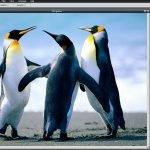 Pixlr Photoshop like